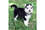 Picture of Precious