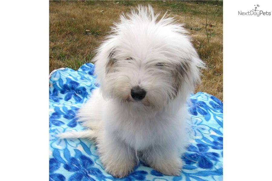 Trained Dogs For Sale Portland Oregon