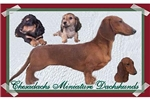 Featured Breeder of Dachshunds with Puppies For Sale