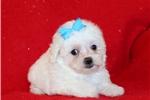 Picture of Bentley