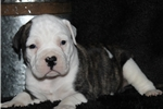 Picture of Bentley-Male (Shipping Included!)