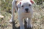 Picture of Popeye-Registered Male (Shipping Included)
