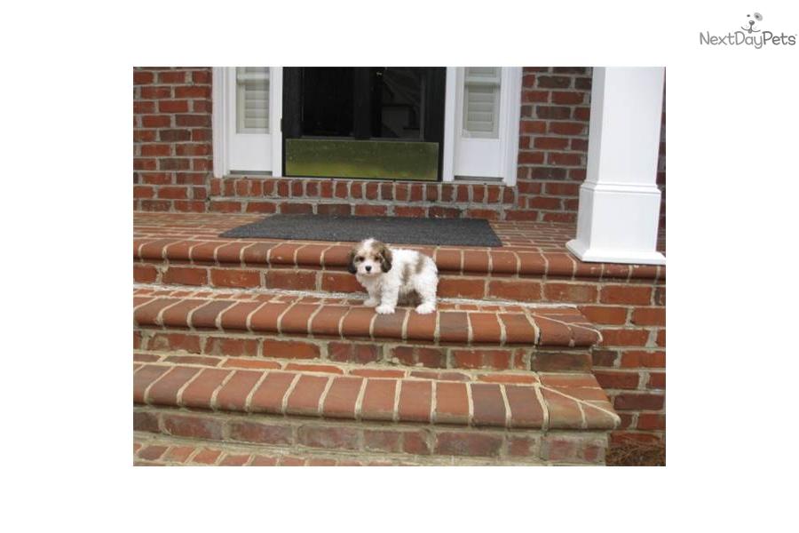 Carly Carolina Dog Breed