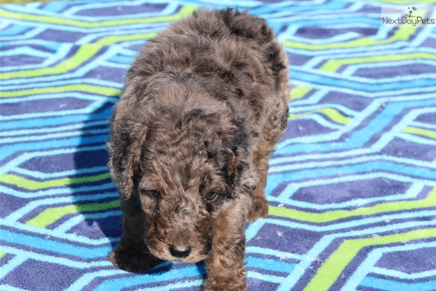 Breeds With Curly Tails To Download Akc Breeds With Curly Tails | Dog ...