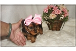 Picture of Daisy is a small baby doll.