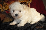Picture of Meet 400 the Bolognese female