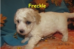 Picture of Meet Freckle, the BoloNoodle