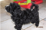 Picture of Meet Romeo, the BoloNoodle