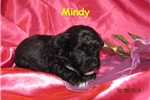 Picture of Meet Mindy, the BoloNoodle