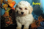 Picture of Meet Bunny, the BoloNoodle