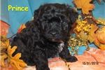 Picture of Meet Prince, the BoloNoodle