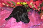 Picture of Meet Midnight, the BoloNoodle
