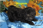 Picture of Meet Magnum, the BoloNoodle