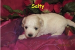 Picture of Meet Salty, the Bolognese