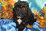 Picture of Meet Bella, the BoloNoodle