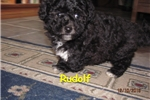 Picture of Meet Prancer, the BoloNoodle
