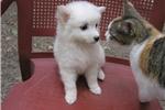 Picture of White Fur Balls
