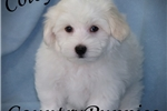 Picture of Colby Gorgeous Small Male