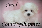Picture of Coral Amazing Small Female