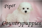 Picture of Piper Beautiful Traditional White