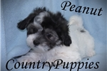 Picture of Peanut Gorgeous male