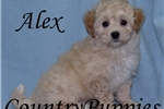 Picture of Alex Very Handsome Male