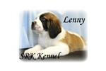 Picture of a Saluki Puppy