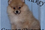 Picture of Mickey Beautiful Ornage Pom