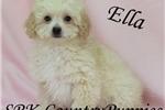 Picture of Ella Beautiful Cream