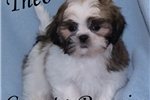 Picture of Theo Small Handsome Male