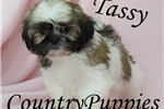 Picture of Tassy Very Small Female