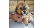 Picture of Visit ABCpuppy.com for details Puppy ID 848