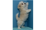 Picture of (Lots of testimonials) Malshipoo ID 1104