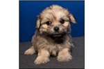 Picture of Visit ABCpuppy.com for details Puppy ID 940