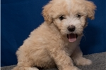 Picture of Visit ABCpuppy.com for details Puppy ID 894
