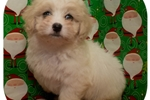 Picture of Visit ABCpuppy.com for details Puppy ID 1002