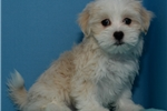 Picture of Malshipoo 1104