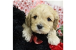 Picture of Tinkerbell Female 1