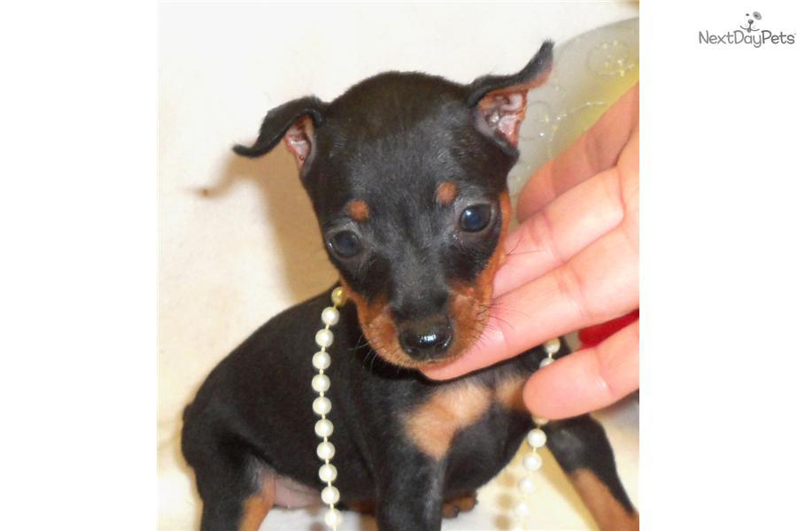 Free Small Dogs Tulsa
