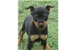 Picture of Bella~ ears cropped!~ **Flight INC in price