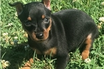 Picture of Little Gigi! Ears to be crop*Flight INC in price