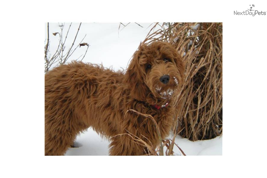 Dog Grooming West Lafayette Indiana
