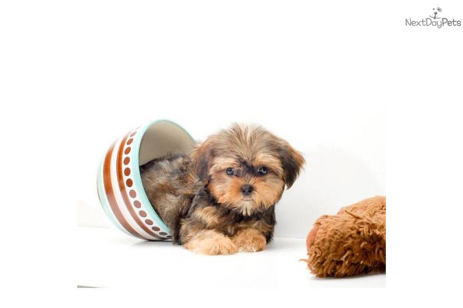 Modesto Pets Craigslist