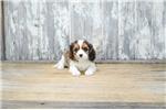 Picture of Jill, WWW.PREMIERPUPS.COM