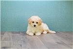 Picture of Riley, WWW.PREMIERPUPS.COM