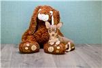 Picture of Mocha, www.premierpups.com