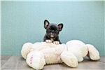 Picture of Monica, WWW.PREMIERPUPS.COM