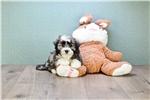 Picture of LEVI, WWW.PREMIERPUPS.COM