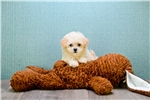 Picture of Carrie, www.premierpups.com