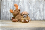 Picture of Chrissy, WWW.PREMIERPUPS.COM